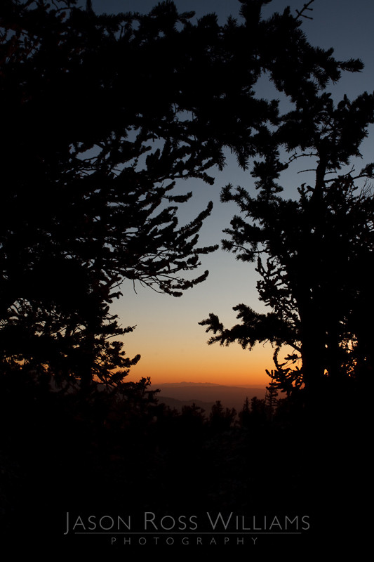 Bristlecone Pines, pine, trees, forest, morning, sunrise, sunset, silhouette, Great Basin, National Park, nature, Nevada